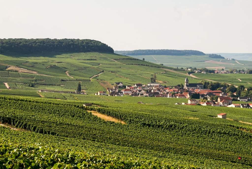 Champagner, Weinberge, Champagne, Genuss, Frankreich